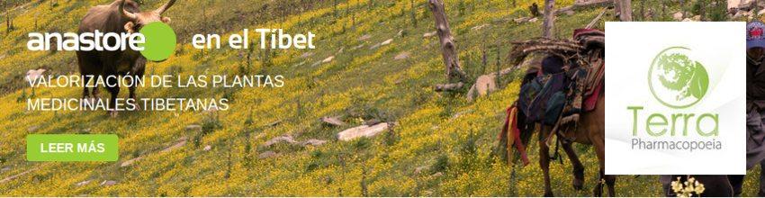 anastore utiliza la agricultura orgánica en el Tíbet respetando la ecología y la ética
