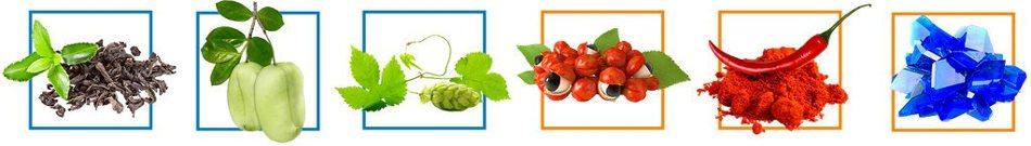 hochwertige natürliche Inhaltsstoffe bilden phen24 Kapseln