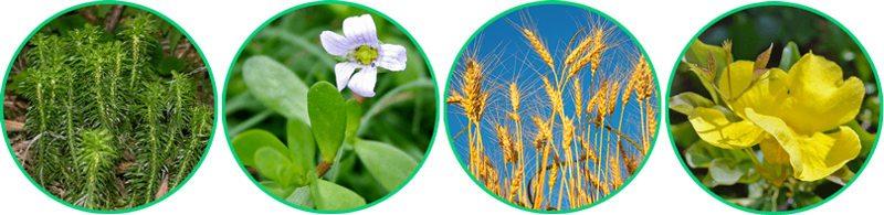 noocube è realizzato con ingredienti naturali di alta qualità testati e approvati scientificamente
