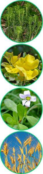 principales ingredientes naturales de alta calidad de Noocube y sus beneficios