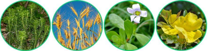 Ingredientes naturais de alta qualidade para melhorar o funcionamento cognitivo
