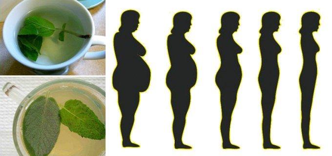 Plantes pour mincir et aider le corps à drainer et éliminer les graisses